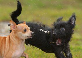 Cachorros que ladrem intensamente – como proceder?