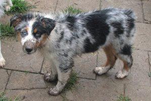 Doze problemas de comportamento dos cães