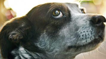 Erros que donos de cachorros costumam praticar
