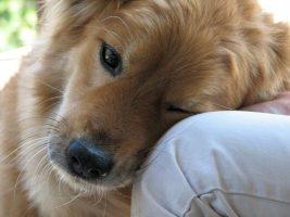 14 formas de um cachorro gostar de uma pessoa