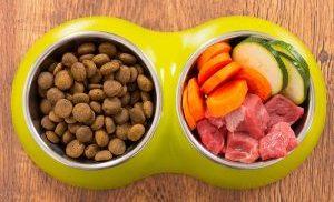 Frutas e Legumes para um Shih-Tzu - Entenda a respeito