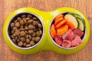 alimentação cães ração e legumes